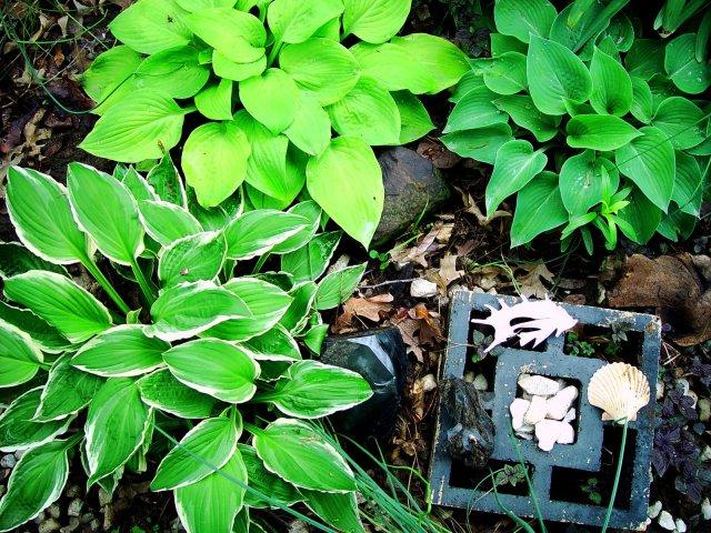Garden Thyme-Hostas, Mason City, and Frank LloydWright