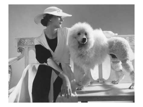 Poodle Time!-Poodles in Fashion Photography