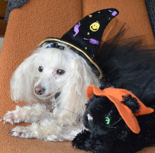 Poodle Time!-Happy Halloween