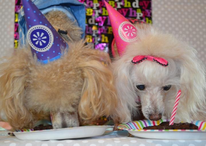 Poodle Time!-Sophia's BirthdayBrownies